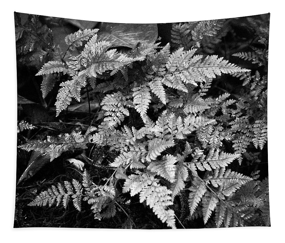 Fern Tapestry featuring the photograph Fern 8664 by Timothy Bischoff