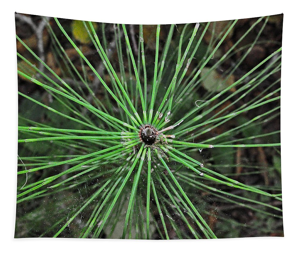 Fern Tapestry featuring the photograph Fern Like A Spider by Tikvah's Hope