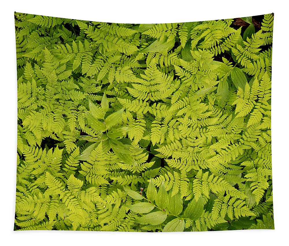 Ferns Tapestry featuring the photograph 1m2436-ferns At The Base Of Mt. Robson by Ed Cooper Photography