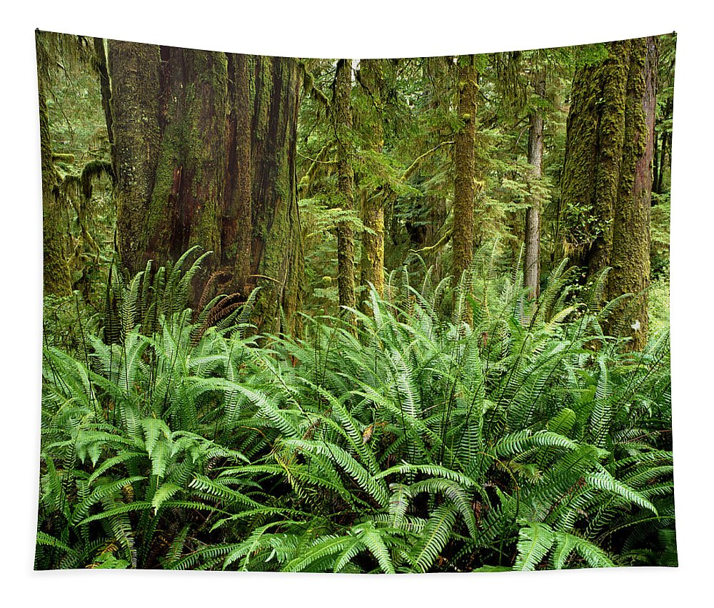Ferns Tapestry featuring the photograph 1a2912-ferns In Rain Forest Canada by Ed Cooper Photography