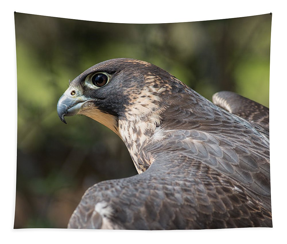 Peregrine Falcon Tapestry featuring the photograph Fierce Predator by Dale Kincaid