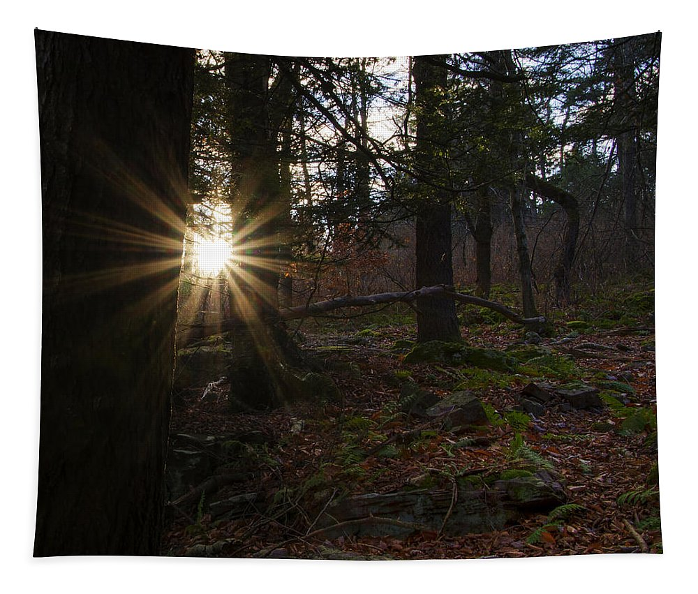 First Tapestry featuring the photograph First Light Of Morning by Bill Cannon