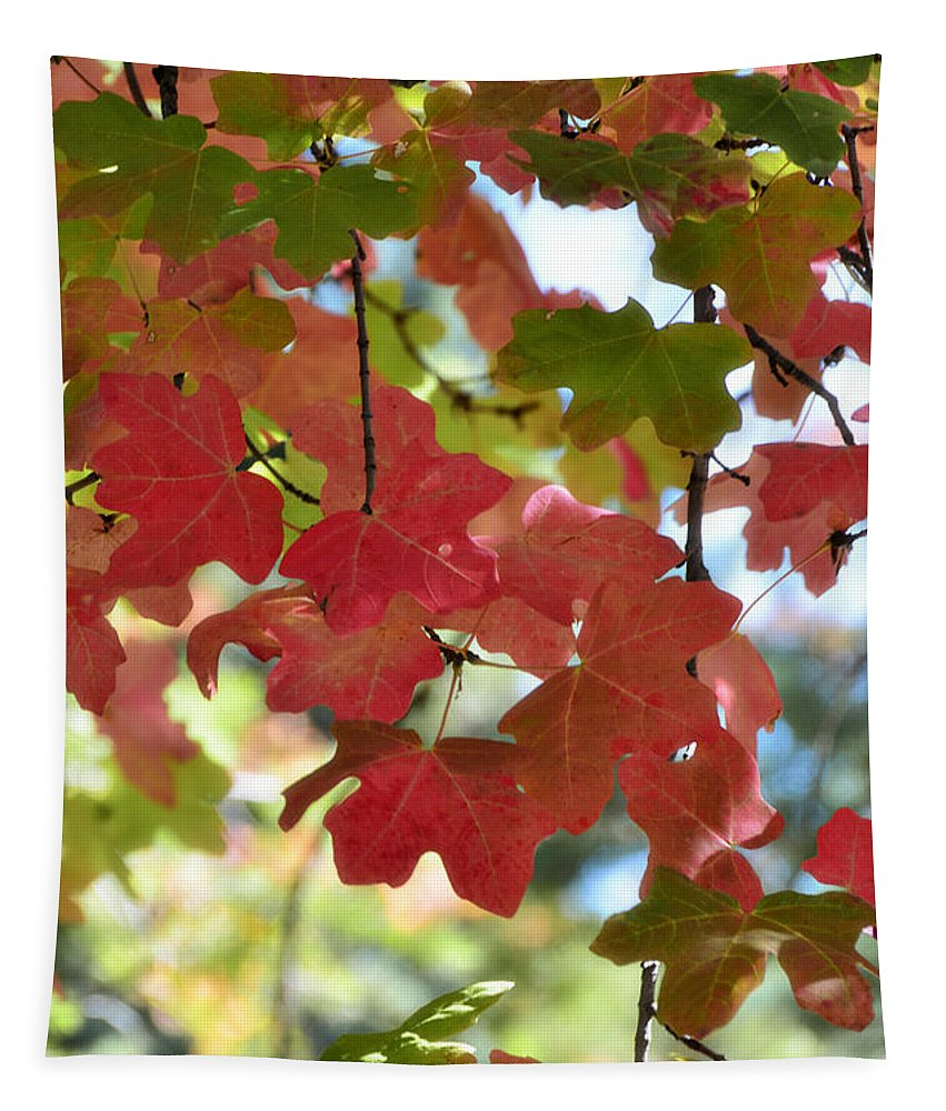 Fall Foliage Tapestry featuring the photograph First Signs Of Fall by Saija Lehtonen