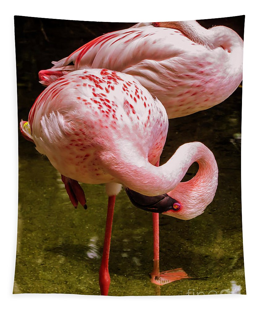 Flamingo Tapestry featuring the photograph Flamingo 		 by Zina Stromberg