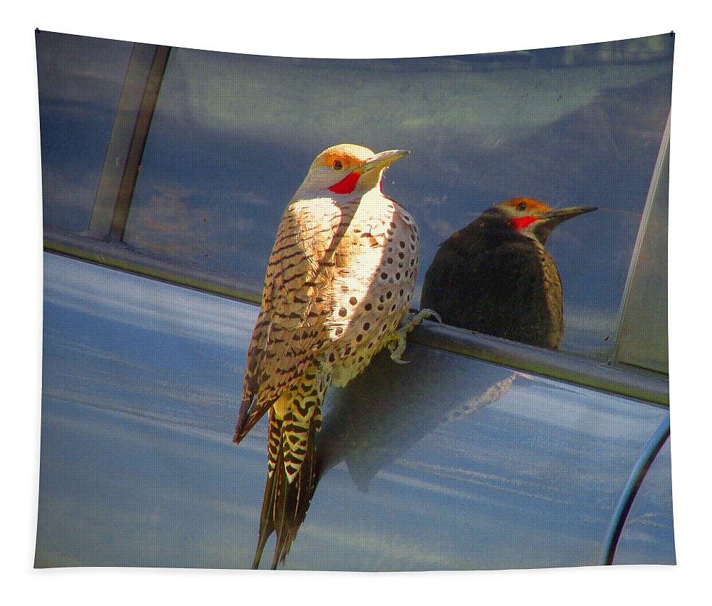 Flicker Tapestry featuring the photograph Yellow Shafted Northern Flicker Hanging Around by Joyce Dickens