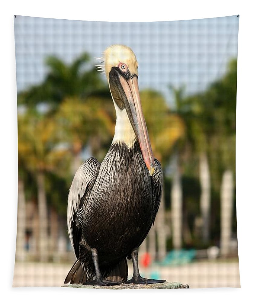 Pelican Tapestry featuring the photograph Florida Brown Pelican by Carol Groenen