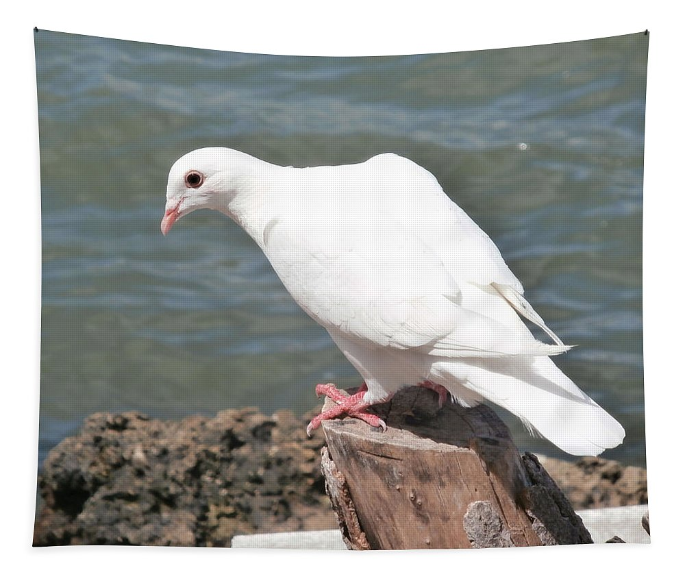 Pigeon Tapestry featuring the photograph Florida White Pigeon by Richard Bryce and Family