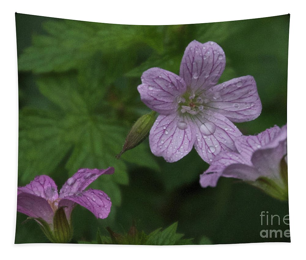 Purple Tapestry featuring the photograph Flower Bath by William Norton