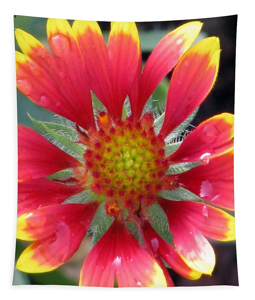Flower Tapestry featuring the photograph Flower Garden 46 by Pamela Critchlow