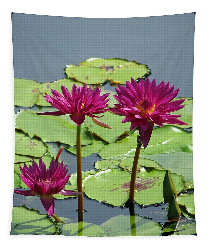 Flower Tapestry featuring the photograph Flower Garden 57 by Pamela Critchlow