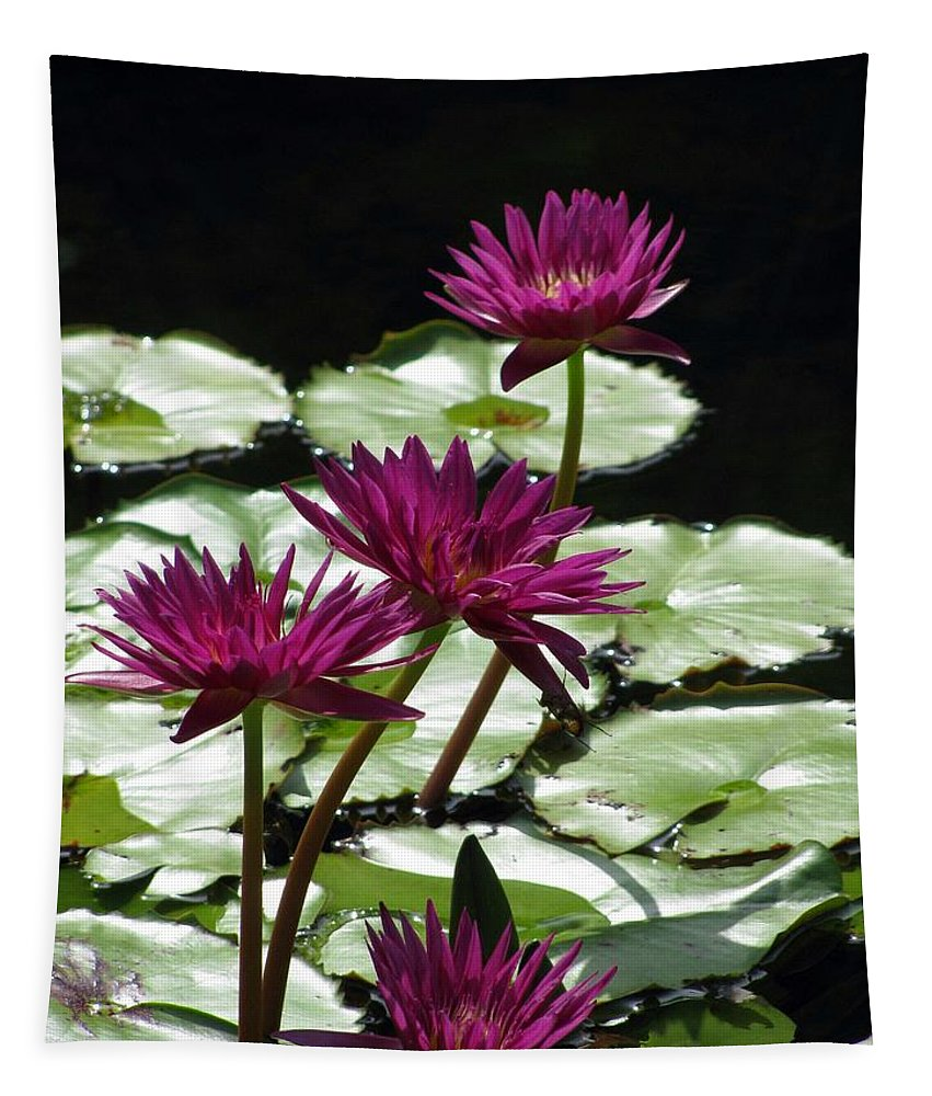 Flower Tapestry featuring the photograph Flower Garden 59 by Pamela Critchlow
