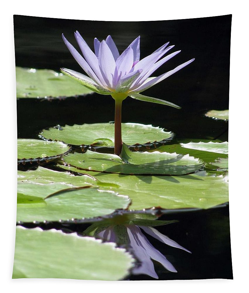 Flower Tapestry featuring the photograph Flower Garden 62 by Pamela Critchlow