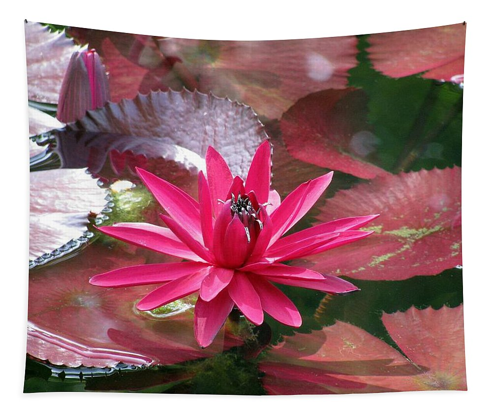 Flower Tapestry featuring the photograph Flower Garden 67 by Pamela Critchlow