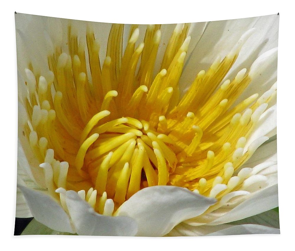Flower Tapestry featuring the photograph Flower Garden 68 by Pamela Critchlow