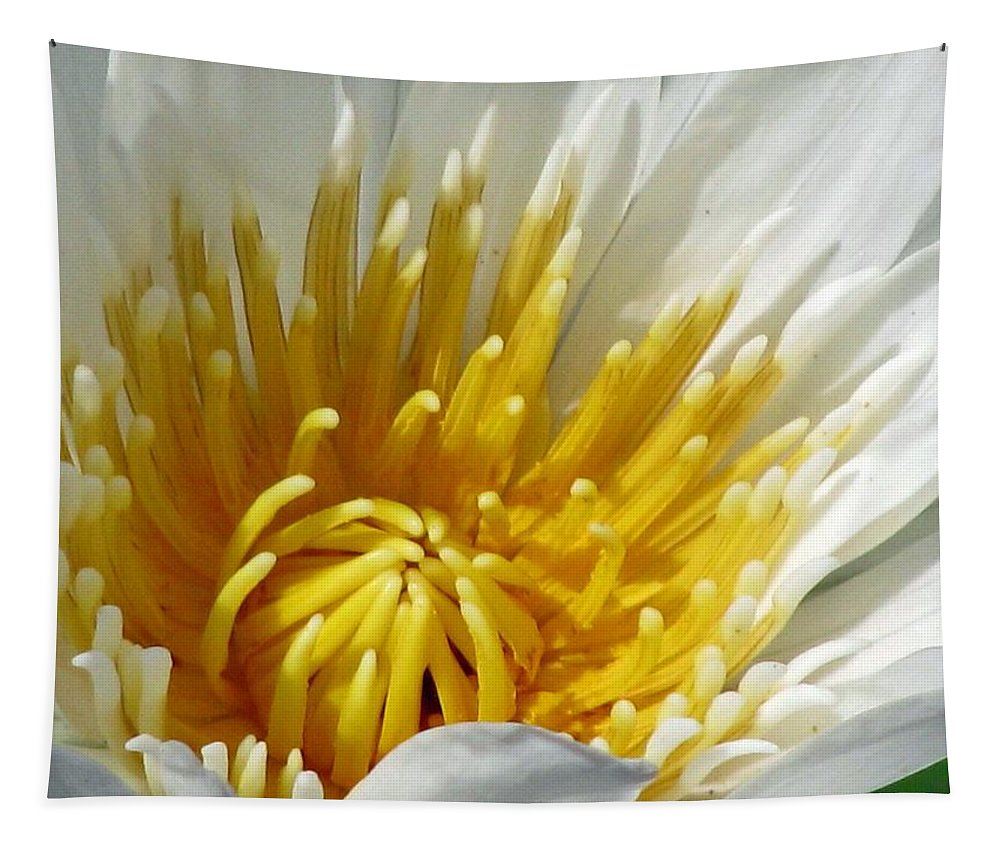Flower Tapestry featuring the photograph Flower Garden 69 by Pamela Critchlow