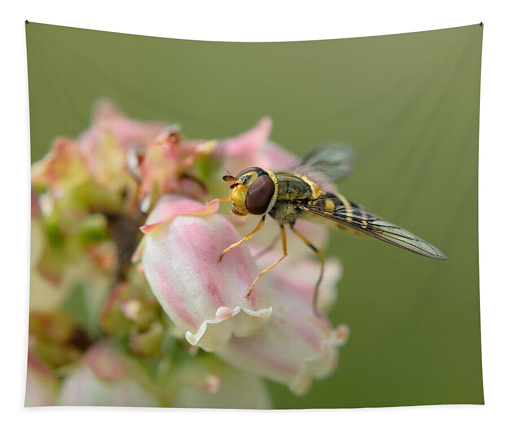 Flowerfly Tapestry featuring the photograph Flowerfly On Blueberry Blossom by Susan Capuano