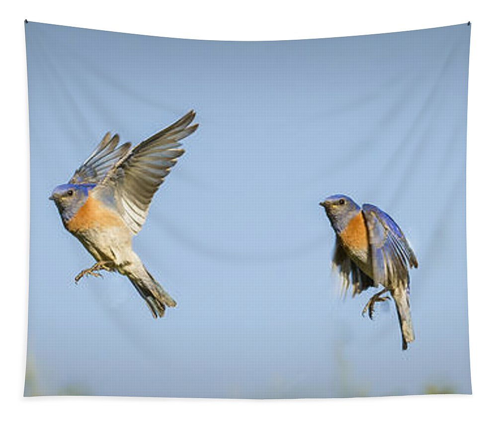Birds Tapestry featuring the photograph Flying by Jean Noren