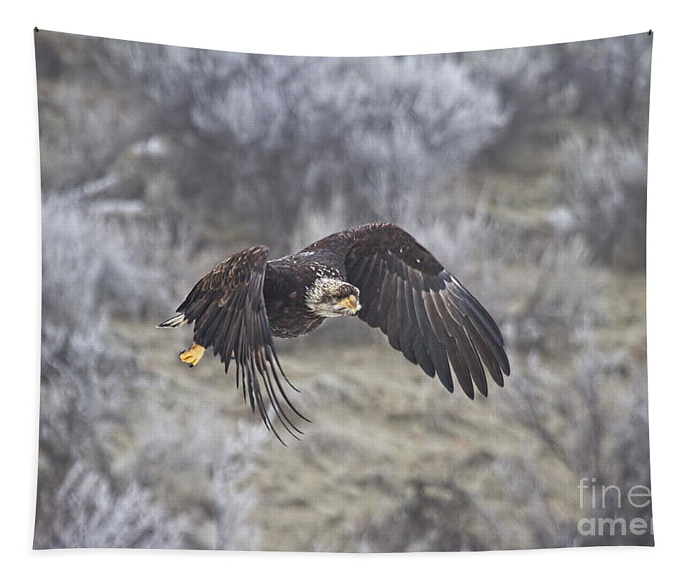 Eagle Tapestry featuring the photograph Flying Low by Mike Dawson