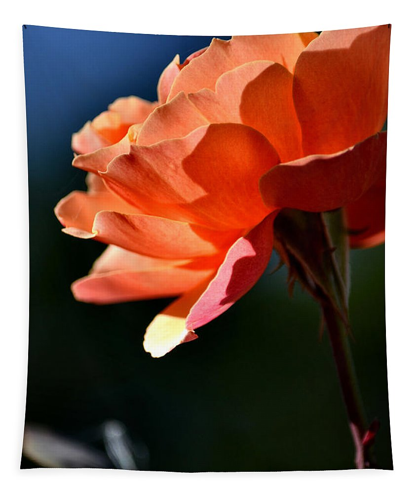 Orange Rose Tapestry featuring the photograph For You Dear by Deb Halloran