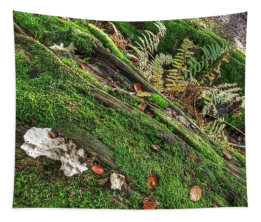 Forest Floor Tapestry featuring the photograph Forest Floor Fungi And Moss by Gill Billington