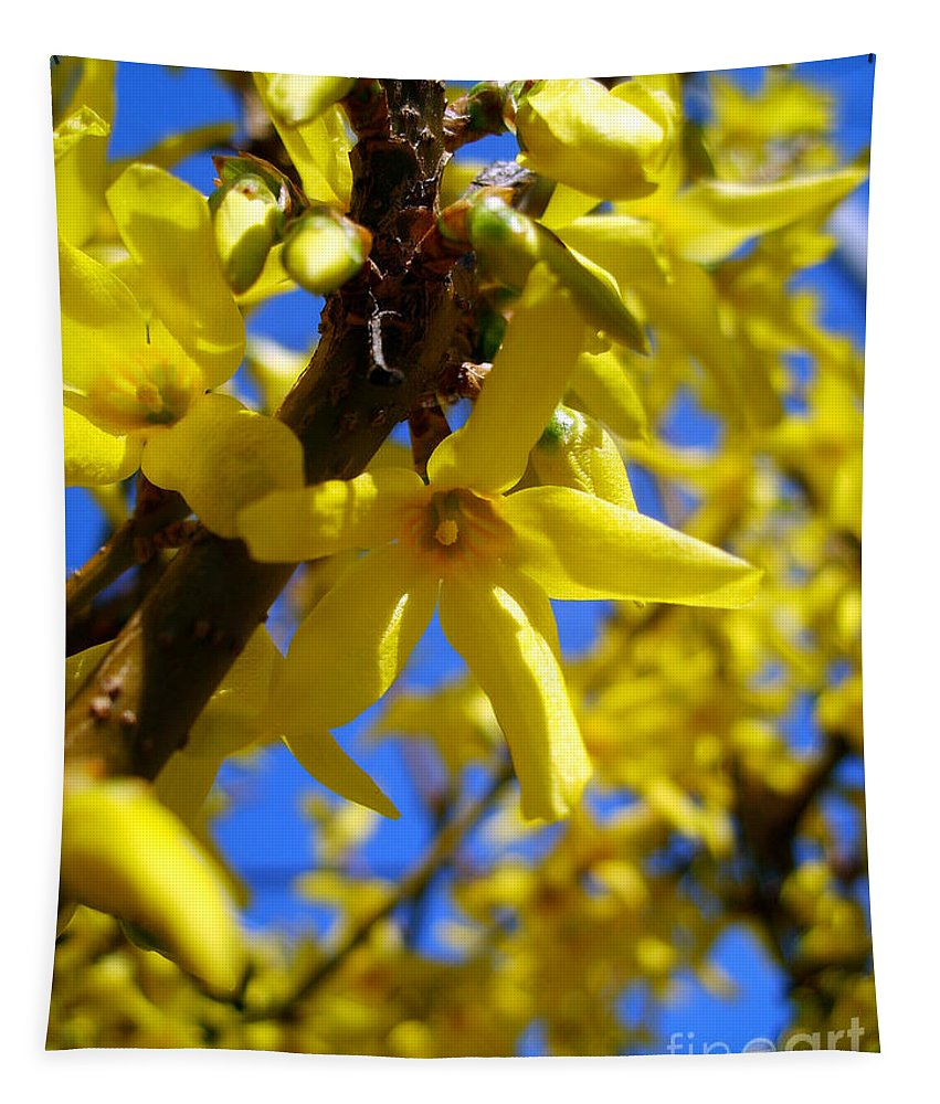 Forsythia Tapestry featuring the photograph Forsythia by Nina Ficur Feenan