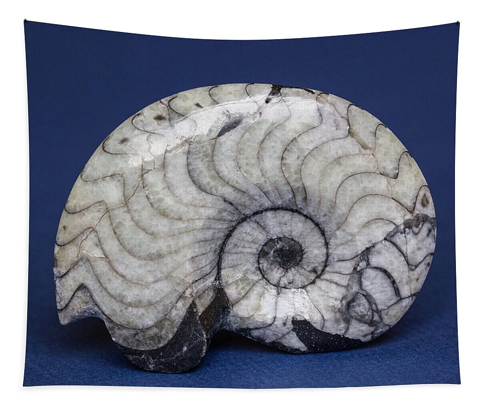 Fossils Tapestry featuring the photograph Fossilized Ammonite by Robert Storost