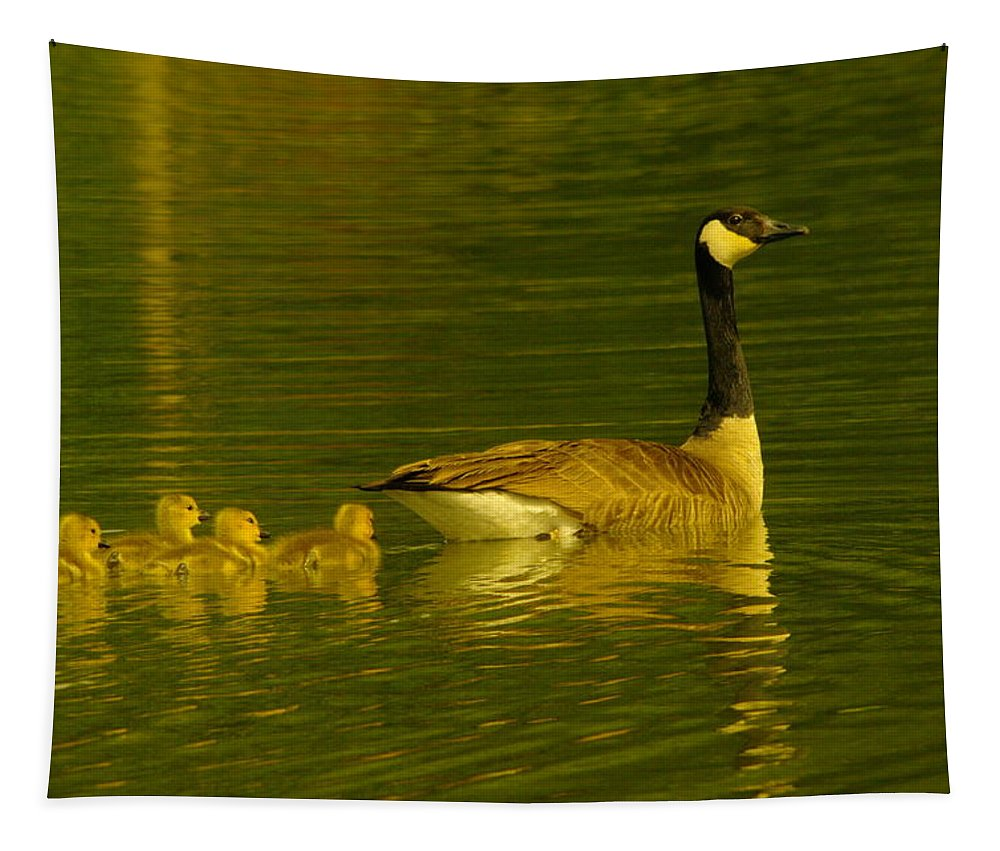 Birds Tapestry featuring the photograph Four Little Miracles by Jeff Swan