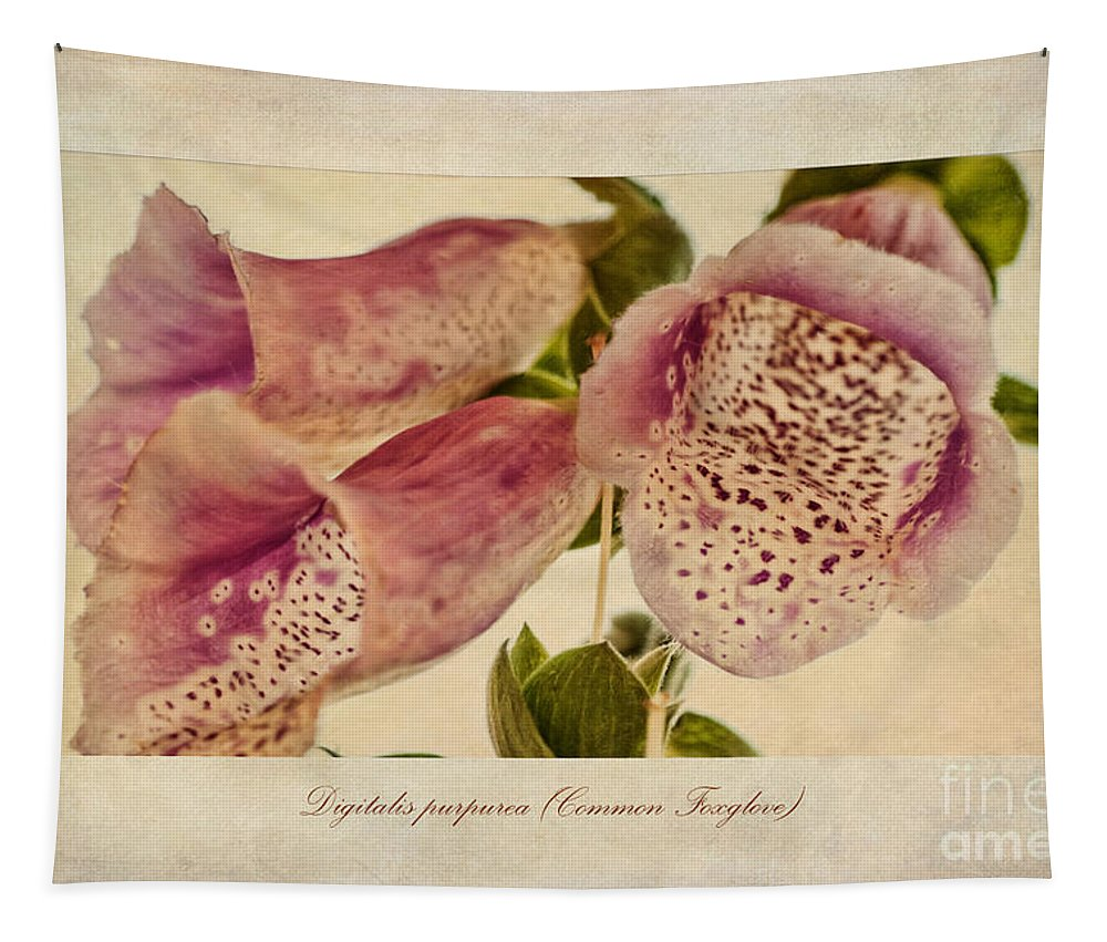 Foxglove Painting Tapestry featuring the painting Foxglove Textures by John Edwards
