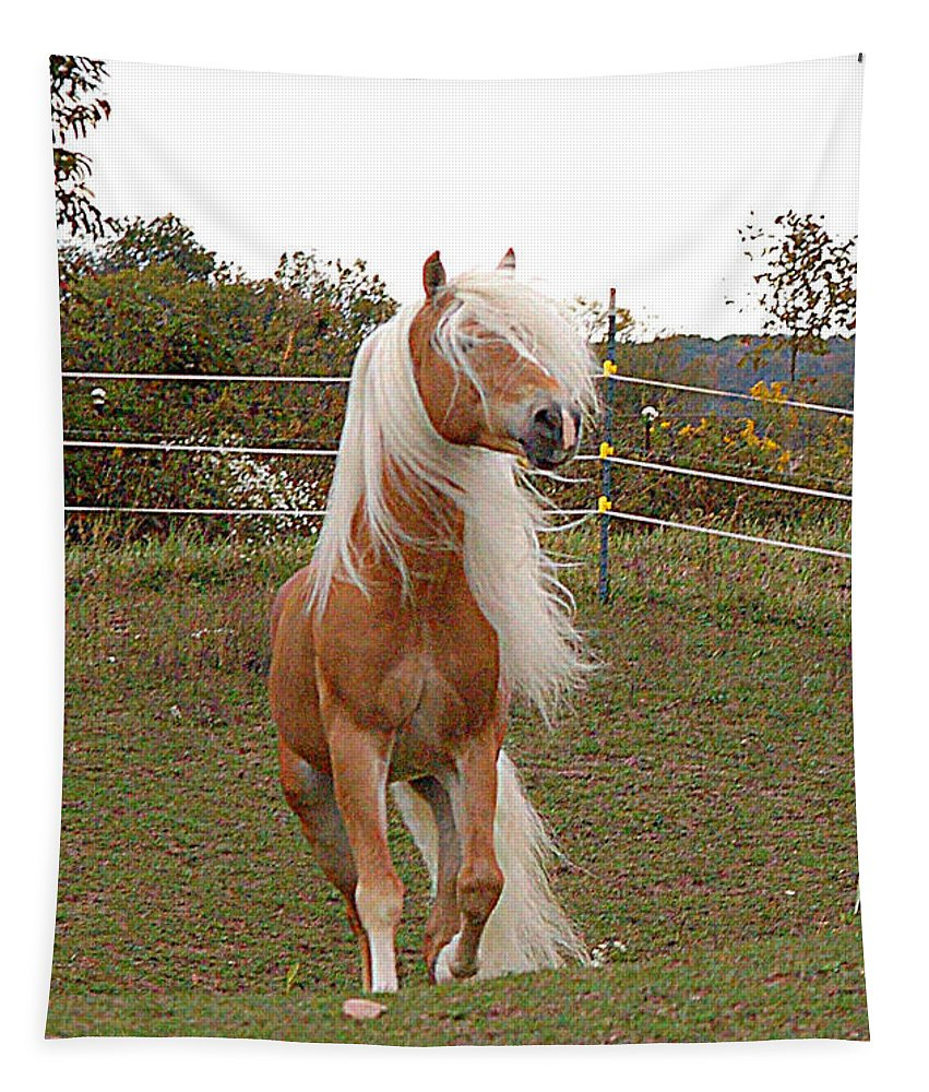 Stallion Tapestry featuring the photograph Free Spirit by Annette Persinger