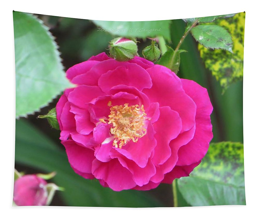Pink Rose Tapestry featuring the photograph French Rose by Sonali Gangane