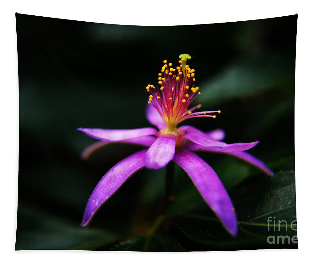 Flowers Tapestry featuring the photograph Fresh by Ben Yassa