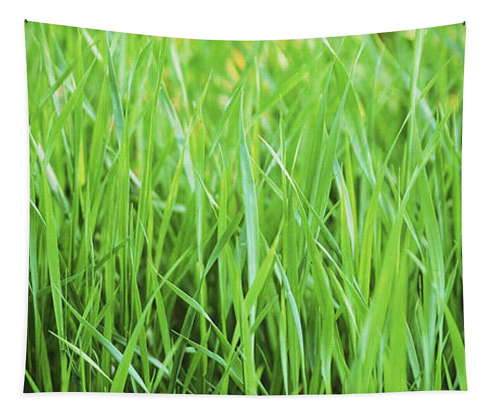 Grass Tapestry featuring the photograph Fresh Grass by Sabine Jacobs
