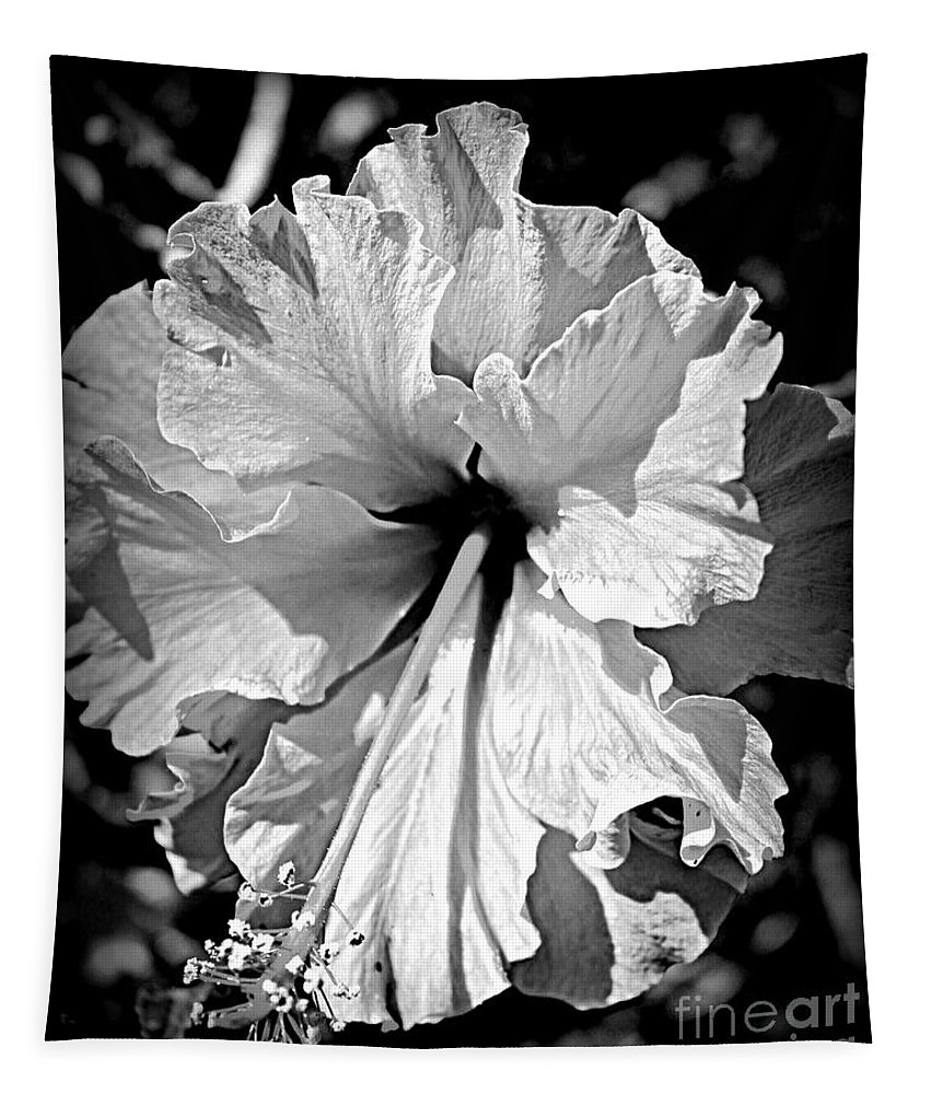 Hibiscus Tapestry featuring the photograph Frills And Hibiscus Flowers by Clare Bevan