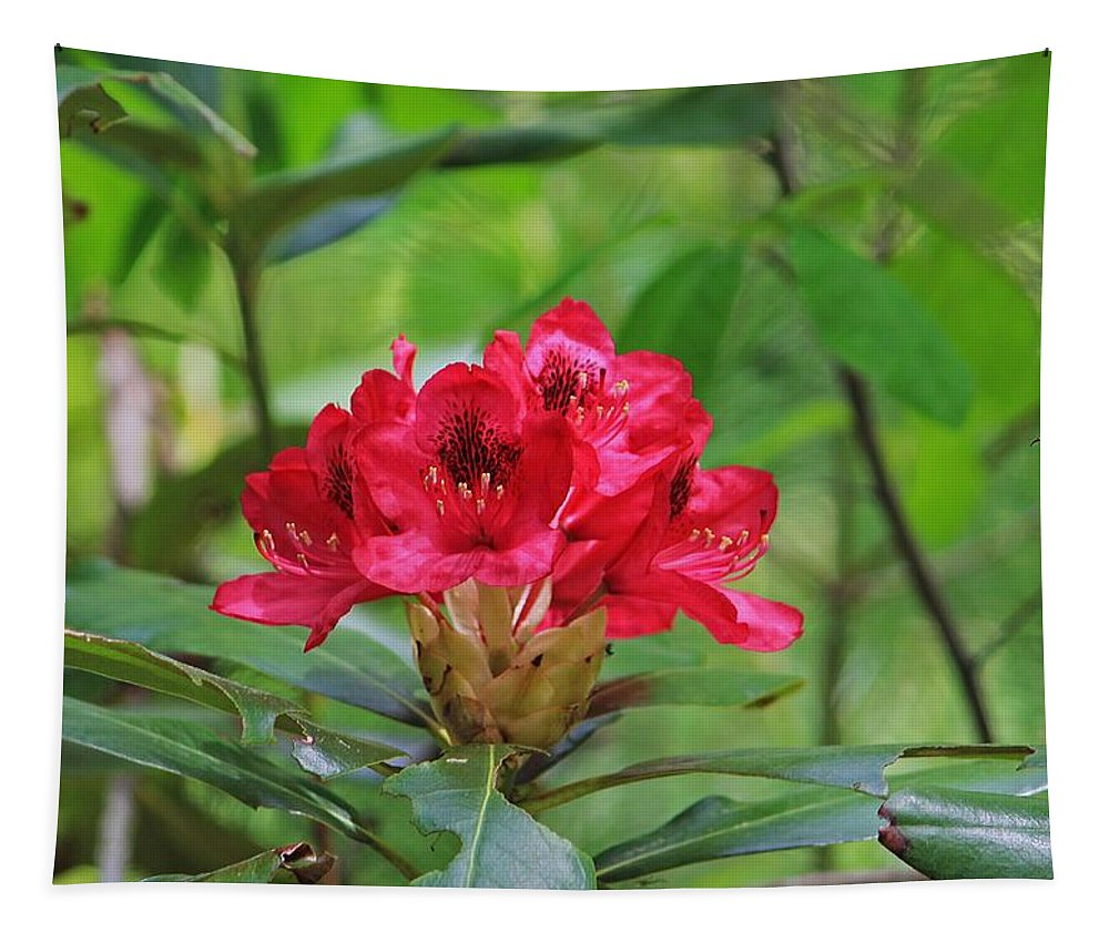 Moore State Park Tapestry featuring the photograph Fuchsia Rhododendron Moore State Park by Michael Saunders