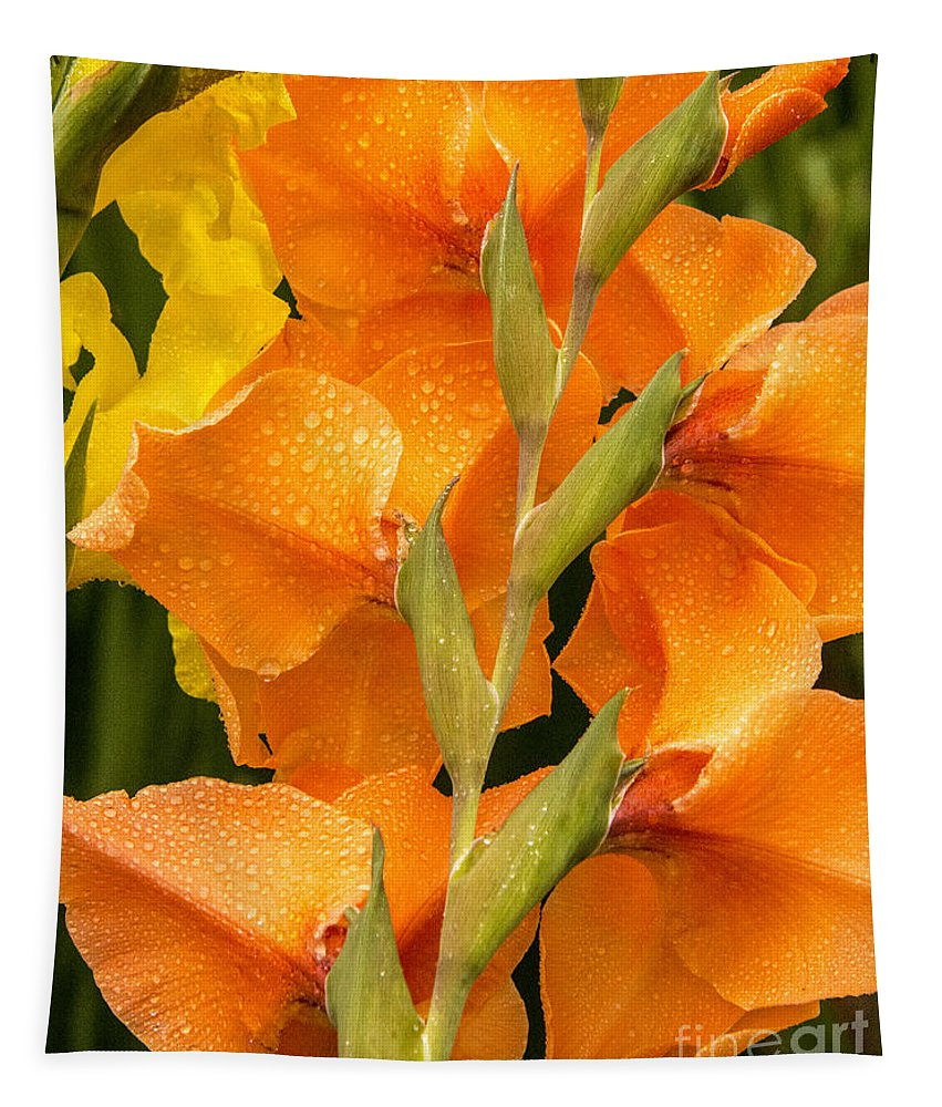 Flower Tapestry featuring the photograph Full Stem Gladiolus by Paul W Faust - Impressions of Light