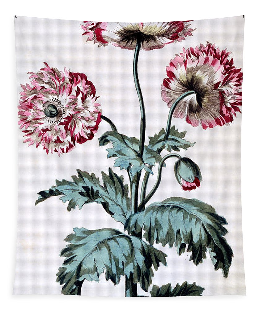 Still-life Tapestry featuring the painting Garden Poppy With Black Seeds by John Edwards
