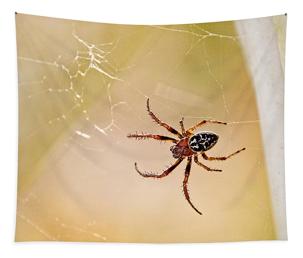 Lower Bruckland Tapestry featuring the photograph Garden Spider - Araneus Diadematus by Susie Peek