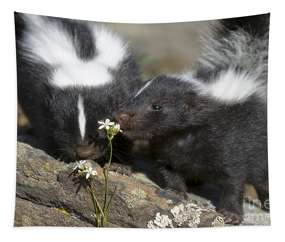 Skunk Tapestry featuring the photograph Gentle by Wildlife Fine Art