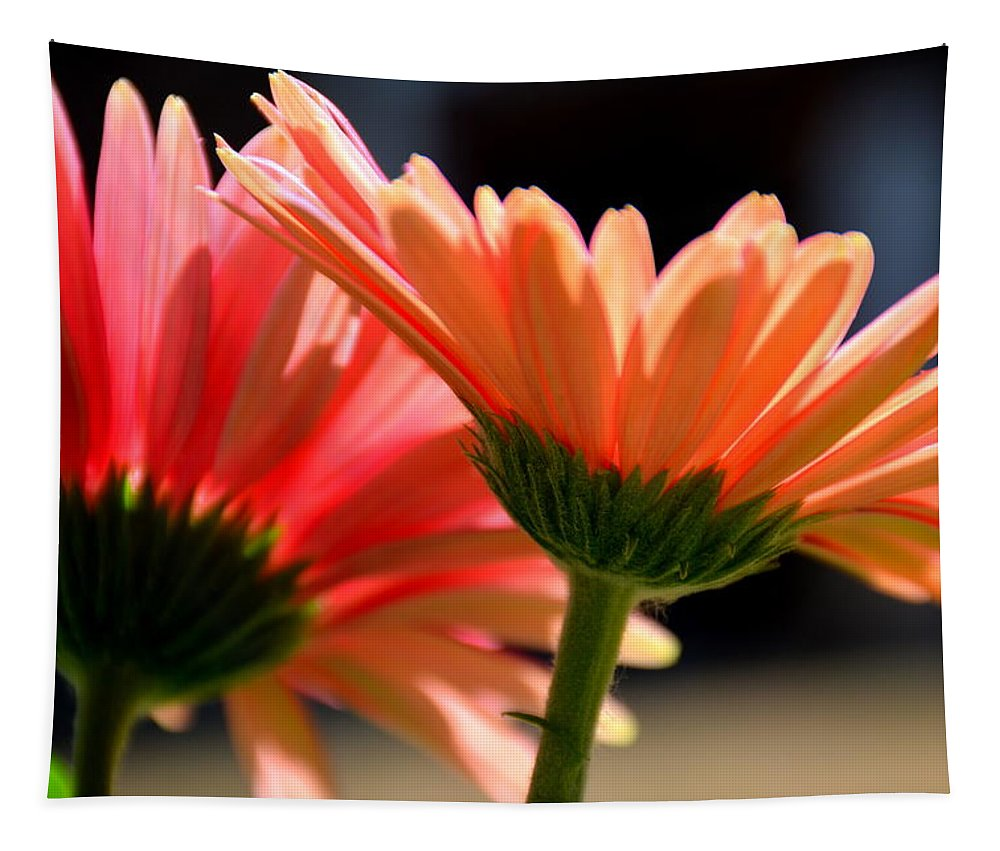Gerber Daisies Tapestry featuring the photograph Gerber Daisies by Lisa Wooten