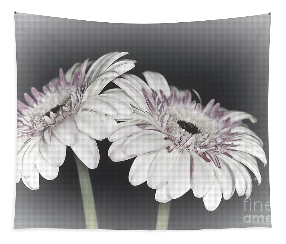 Pink Gerbera Flower Tapestry featuring the photograph Gerbera Dream 2 by Steve Purnell