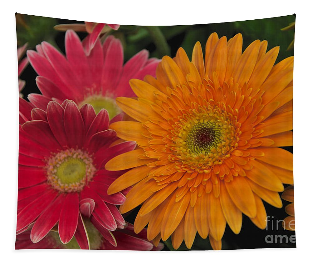 Pink Tapestry featuring the photograph Gerbera by William Norton