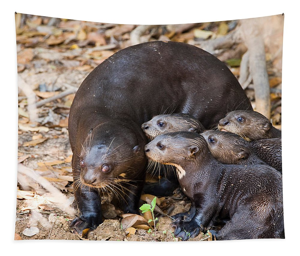 Photography Tapestry featuring the photograph Giant Otter Pteronura Brasiliensis by Panoramic Images