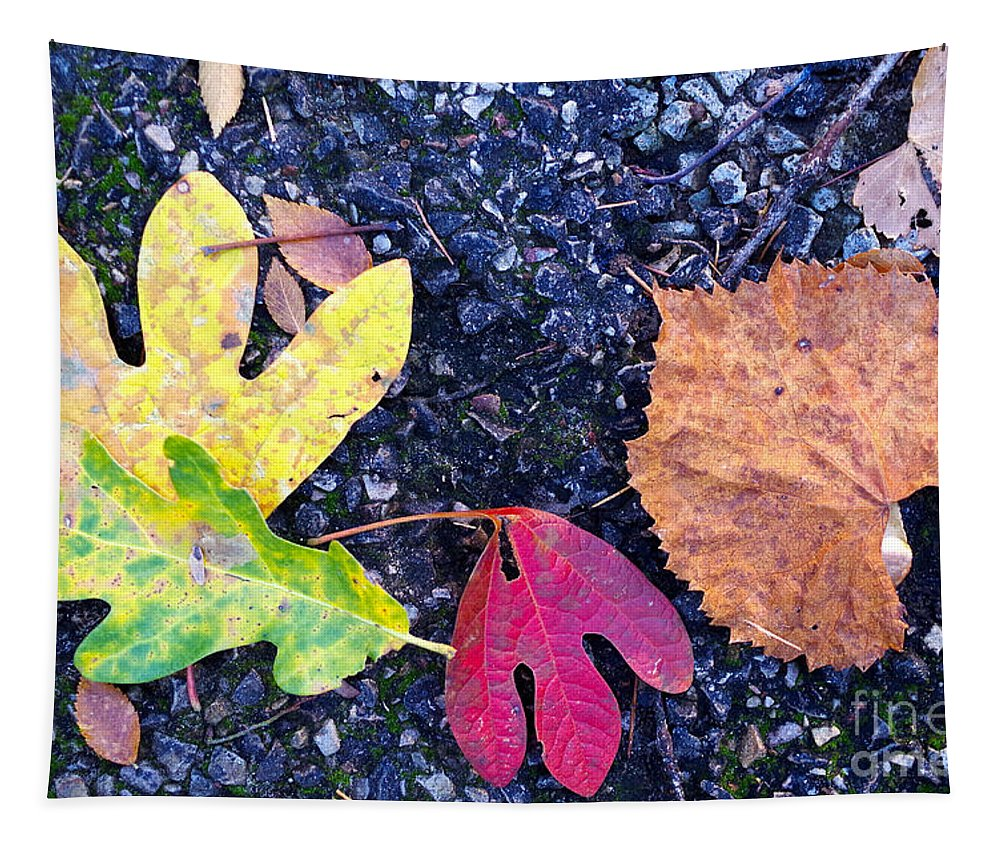 Gift Tapestry featuring the photograph Gift From The Trees by Gary Richards