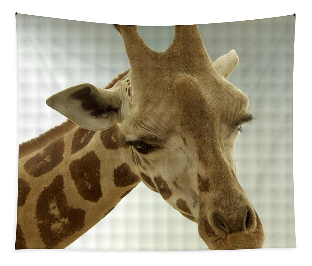 Giraffe Tapestry featuring the photograph Giraffe by Bob Slitzan