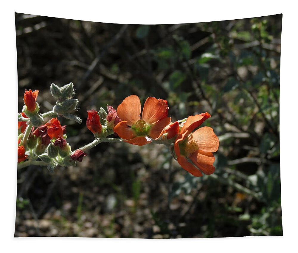 Plant Tapestry featuring the photograph Globemallow by Laurel Powell