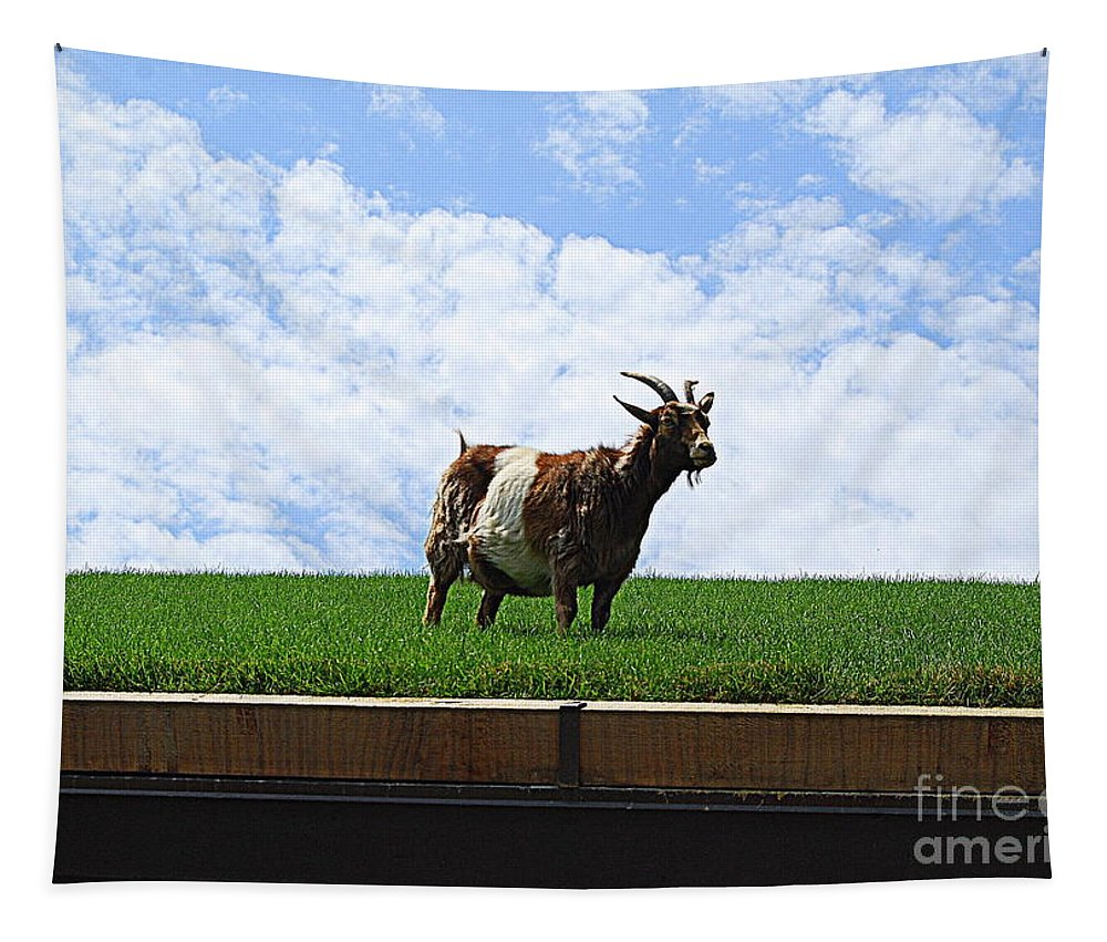 Goat On Roof Tapestry featuring the photograph Goat On A Sod Roof In Sister Bay In Wisconsin by Catherine Sherman