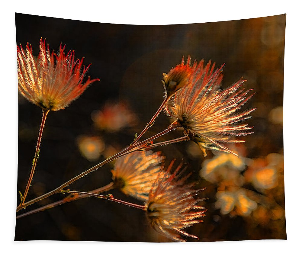 High Desert Tapestry featuring the photograph Going To Seed by Scott Campbell