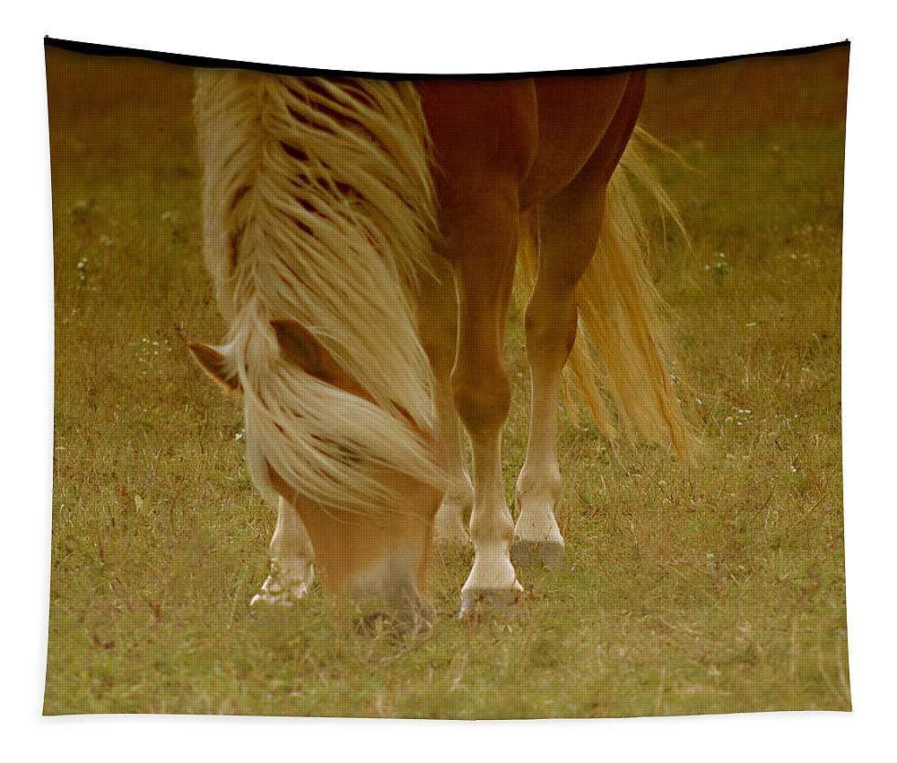Haflinger Tapestry featuring the photograph Golden Glow by Annette Persinger