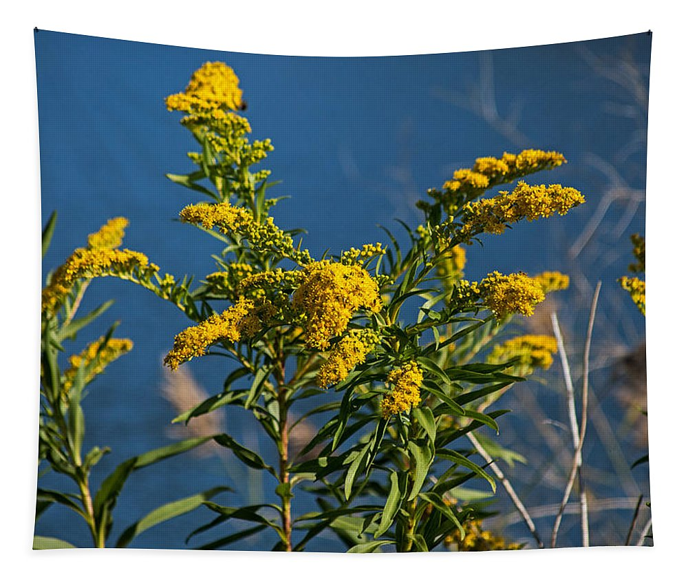 Golden Rods Tapestry featuring the photograph Golden Rods At Northside Park by Bill Swartwout Fine Art Photography