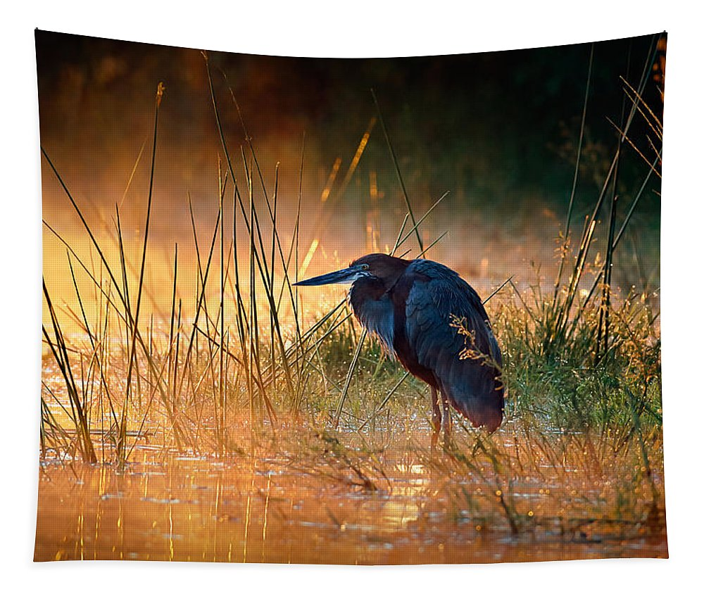 Heron Tapestry featuring the photograph Goliath heron with sunrise over misty river by Johan Swanepoel